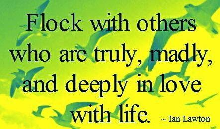 Flock with others who are truly, madly deeply in love with life