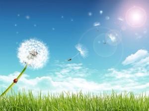 Leave a little sunshine wherever you go!